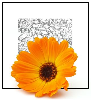 Parfums rares - floraux